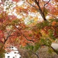 奈良公園 紅葉in2016