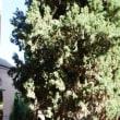 リンダラハのバルコニー