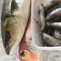 魚盛りたくさん!!