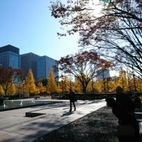 和田倉門から皇居に向かうイチョウ並木の黄葉が見事です