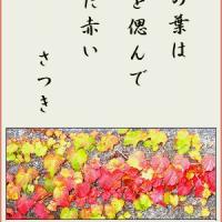 名残り惜しい蔦の葉