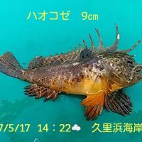 笑転爺の釣行記 5月17日☁ 長瀬・久里浜