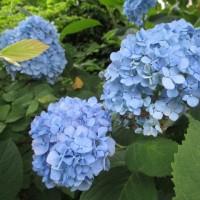 日記(6.26)花