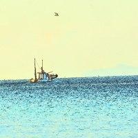 漁師さんたちと鳥さんたちの居る風景<都志川河口にて>