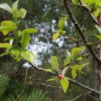 ぐんぐん育て庭の木