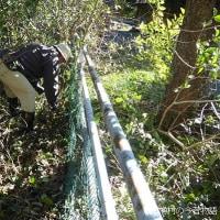 沼井公園のフェンス際を整備