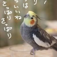 風呂の日(5月26日)