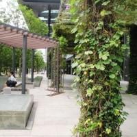 憩いの水場と緑の広場