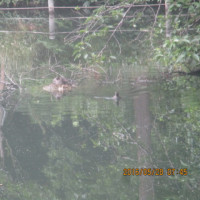 象のはな子と野鳥