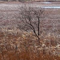 冬景色・芝川第一調節池