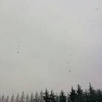 ひどい雪だった