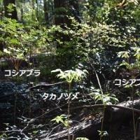 秘密の森へ山菜採りに。