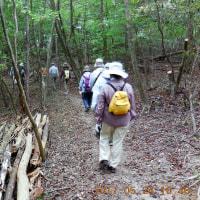 水曜ジョイフルウォークは、旧山下道を三角点までの往復。