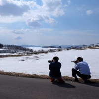 北海道春近し。キツネ様もちょろちょろ見かけます