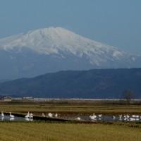 雪化粧の山と白鳥