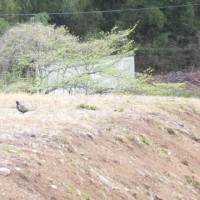 お散歩ロードの鳥たち