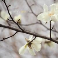春が来た~♪・・・by空倶楽部