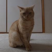 一昨日のネコ =^_^=