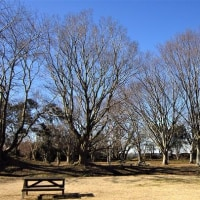 落葉樹の芽が動き始める季節