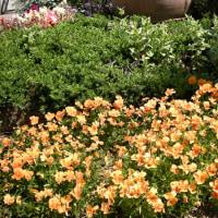 街角の花壇 - (4)