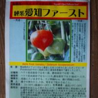 「純系愛知ファースト」を蒔種・「ブラッドオレンジ(モロー)」苗の植え付け