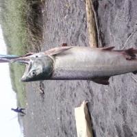 この前、海釣りしに行ってきた