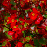 秋の晴れ間の散歩の花