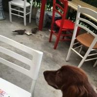 犬好きな台湾料理店のオーナー