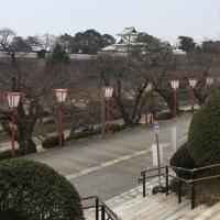 もうすぐ桜~!