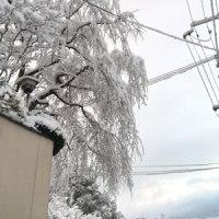 今日も寒くて雪がふる
