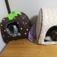 20170116の猫たちと時々犬
