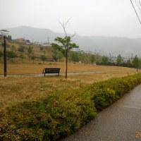 二週間ぶりの雨、昨夜は強風と激しい雨で荒れたが、今日は風も収まりました。