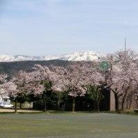 桜と山と。