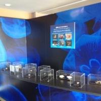 新江ノ島水族館で「しんかい2000」の展示がスタートしました。