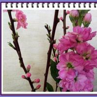 家の春の生け花から