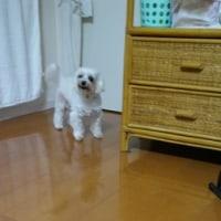 逃げる~~(^_^;)