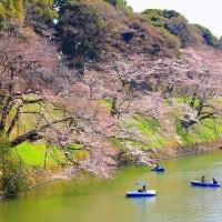 千鳥ヶ淵の桜とお堀に浮かぶボート