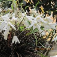 先日の庭に咲いた花の続き