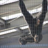 名古屋 東山動物園
