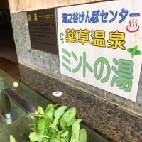 薬草温泉を始めました