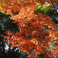 葛西総合リクリエーション公園の紅葉