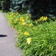 百合が原公園 2017年7月