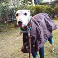 寒~い、午後散歩!!