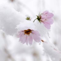 11月の突然の雪に見た風景