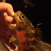 3月の釣果