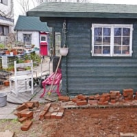 545号 JR庭木を切る。アンの小屋前に花壇を作る。ジャガイモの植えつけ。チューリップの発芽。