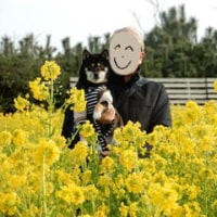 祝 チャロ完全復活旅 1 (菜の花まつり)