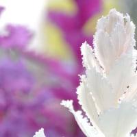 お花の撮影会2