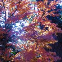 紅葉から水仙のころに