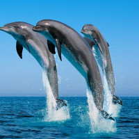 イルカのメディスン